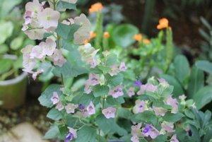 庭の花壇の写真