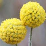 二つの可愛い黄色の花