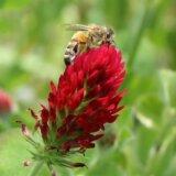 花とミツバチの写真