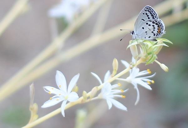 小さな花と小さなチョウチョの写真